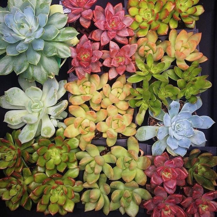 kateryan_plants